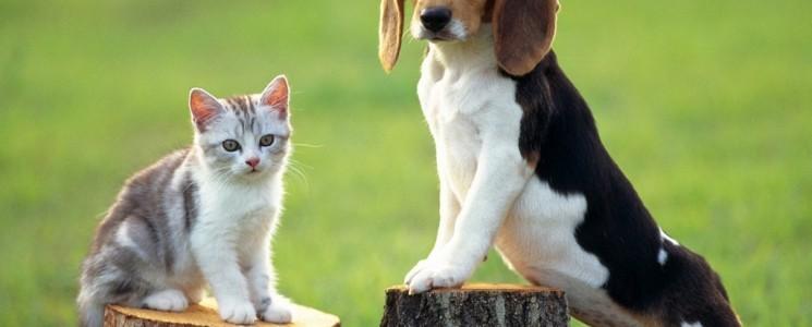 curiozitati Beagle